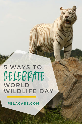 5 ways to celebrate world wildlife day from pelacase.com