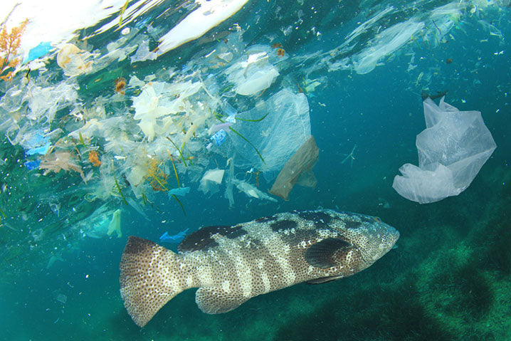 fish swimming in ocean with plastic waste