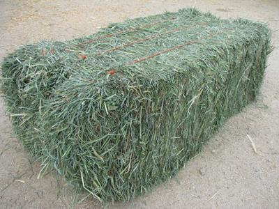 MEADOW  GRASS HAY