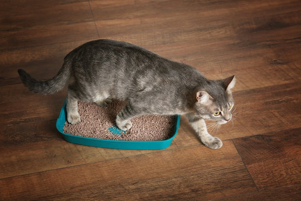 how to dispose of kitty litter