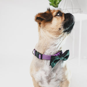 The Bow-Wow-Tie - Urban Hound Social ™