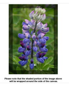 Lupine Canvas - Earth Printz