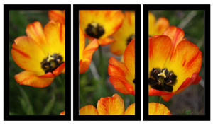 Flowery Sunset Multi Panel Canvas Canvas - Earth Printz