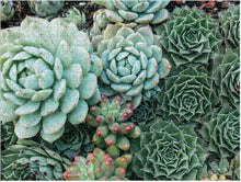 Load image into Gallery viewer, Succulent Garden 2-Sided Puzzle (500 pieces)
