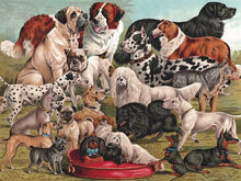 Load image into Gallery viewer, Dog Breeds Puzzle (1000 pieces)
