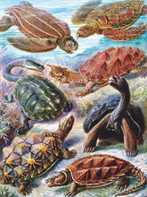 Load image into Gallery viewer, Turtles Jigsaw Puzzle (1000 pieces)