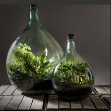 Load image into Gallery viewer, TERRARIUM KIT - 15 Ltr