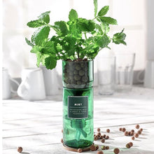 Load image into Gallery viewer, GOOD GLASS WICKED WICKS - Hydroponic Herb Kits