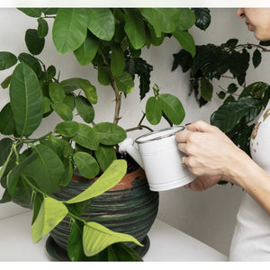 PLANTSMITHS - Fortifying Houseplant Plant Food Tonic