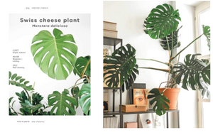 INDOOR JUNGLE - The Leaf Supply Guide to Creating your Indoor Jungle