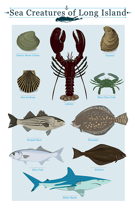 Long Island Sea Creatures Chart