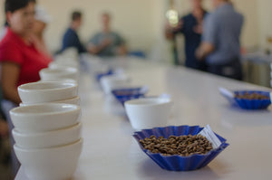 Cupping in Nicaragua