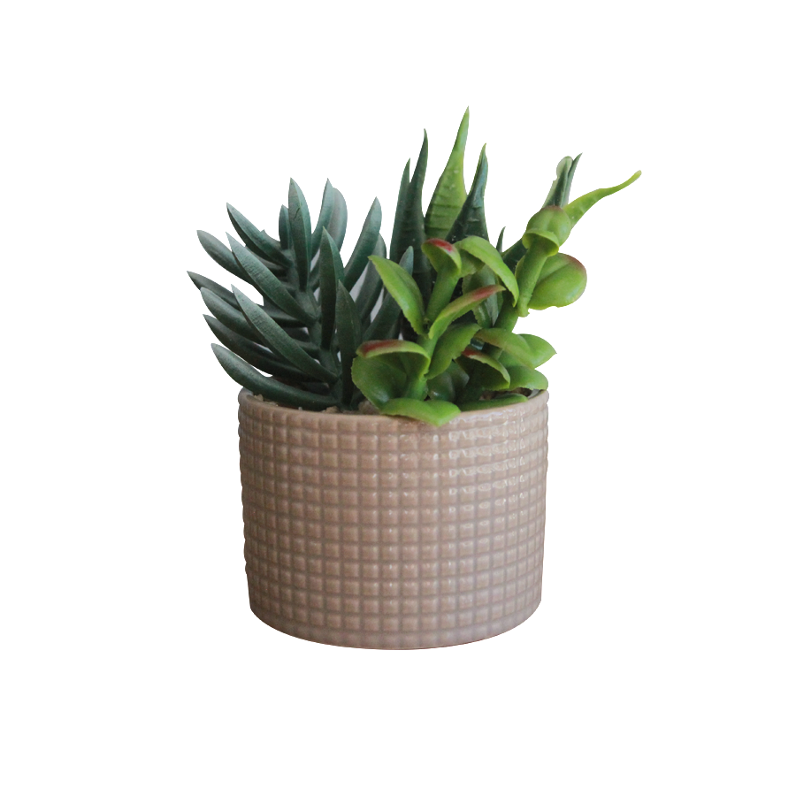 "16058K5 Succulents in Round White 2.75"" Pot"