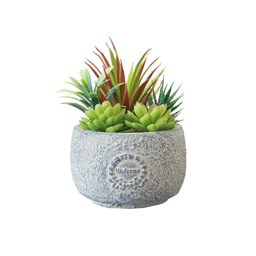 18S154KB Succulent in Round Concrete Pot