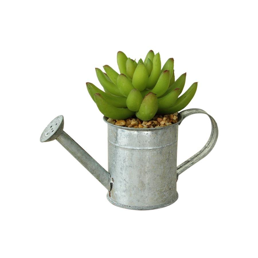 CH06706468 Cactus with Iron Kettle Pot