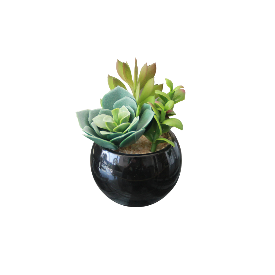 A6056KE Succulent in Round Pot