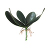 CH03908615 Hand Touch Orchid Leaves Bush *6