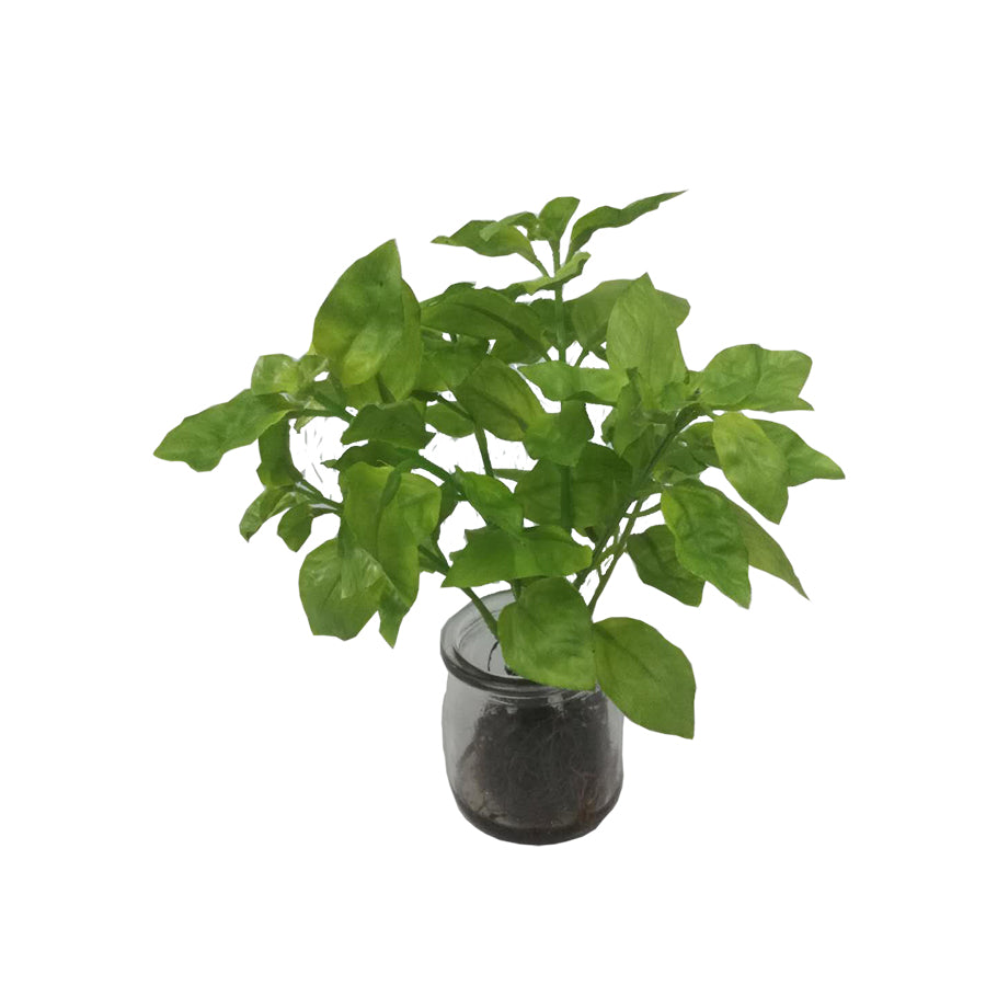 Green Mentha Plant In Mini Glass Vase