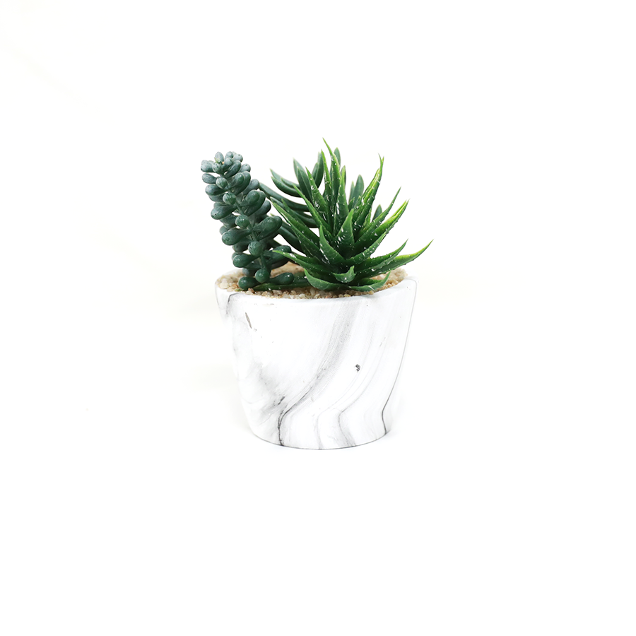 Succulent In Marble Pot 14cm