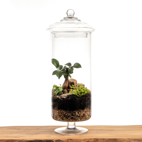 Bonsai Candy Jar