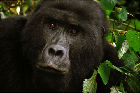 Why the rainforest animals?