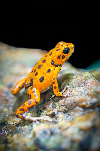 Rainforest animals you should know of.