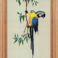 Macaw Cross Stitch Design - stitchaphoto