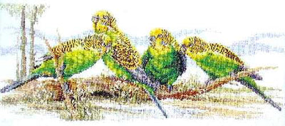 Budgie Buddies - A Country Threads Cross Stitch Chart