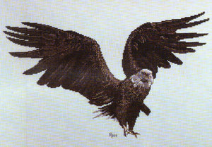 Bald Eagle - A Ross Originals cross stitch chart