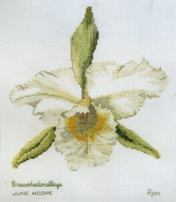 Orchid Brassolaeliocattleya - A Ross Originals cross stitch chart