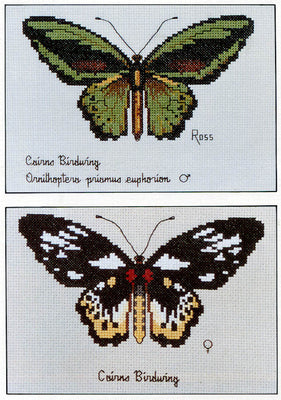 Cairns Birdwing Butterfly - A Ross Originals cross stitch chart