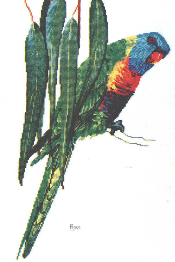 Rainbow Lorikeet I - A Ross Originals cross stitch chart