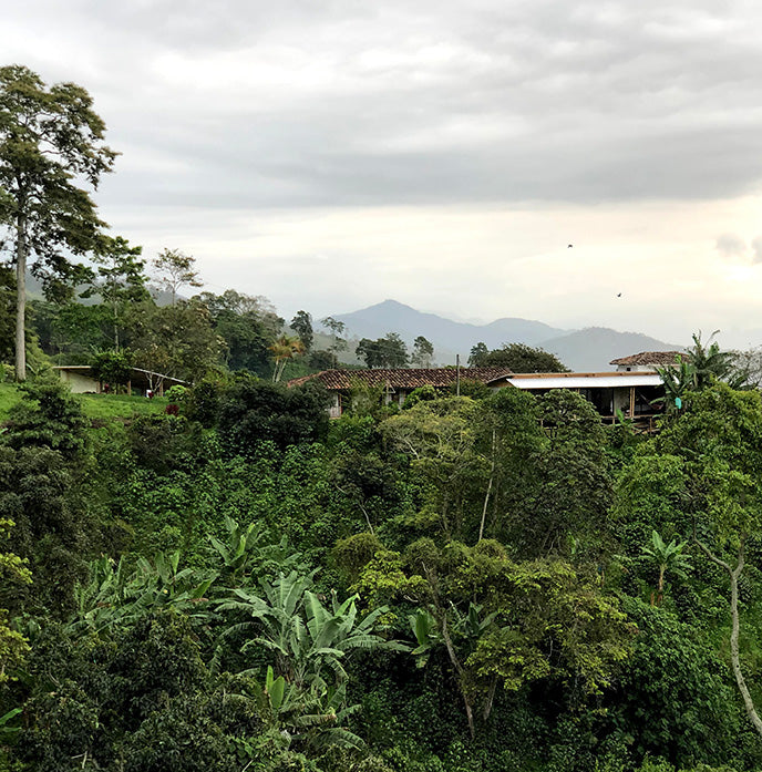 The El Fenix coffee farm in Colombia's Cauca Valley
