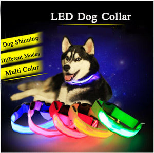 LED Dog Collar Nylon Glow Flashing Light Up Safety Pet Collars Party