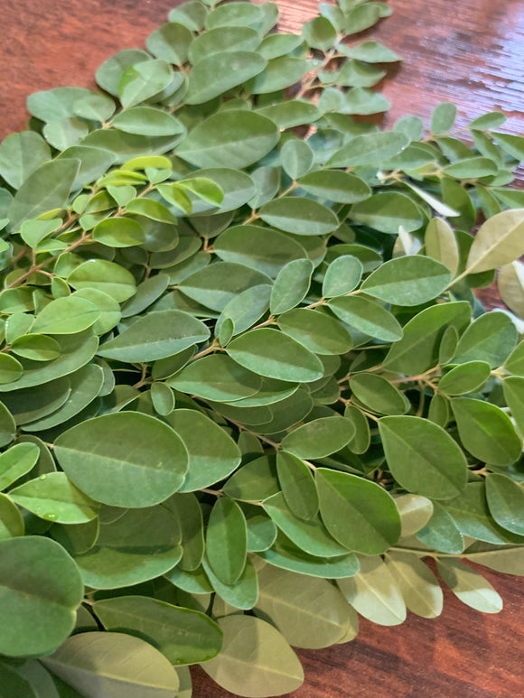 MORINGA: THE SUPERFOOD FROM THE MIRACLE TREE