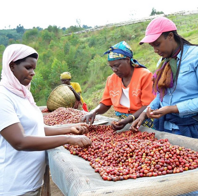 Behind the Coffee:  A Closer Look at JNP Coffee in Burundi
