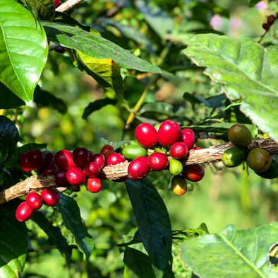 Behind the Coffee: A Closer Look at La Palma y El Tucan