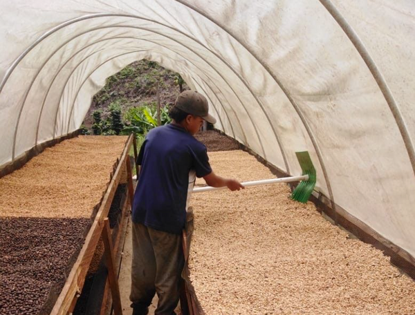 Tropical-Summer-Colombia-Coffee-Processing
