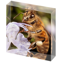Load image into Gallery viewer, Honey bee on rosemary