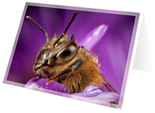 Load image into Gallery viewer, Honey bee on aster