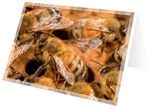 Honey bees on brood comb