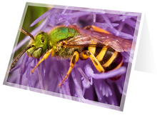 Load image into Gallery viewer, Sweat bee on thistle