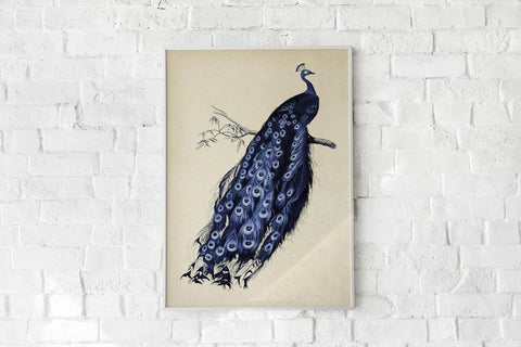 Antique Blue Peacock Poster