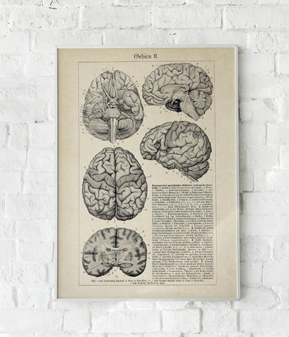 Antique Brain Chart Poster