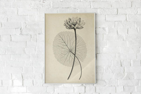 Antique White Egyptian Lotus Flower Poster