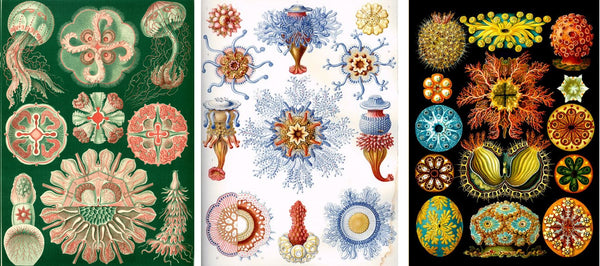 ernst haeckel's lithographs
