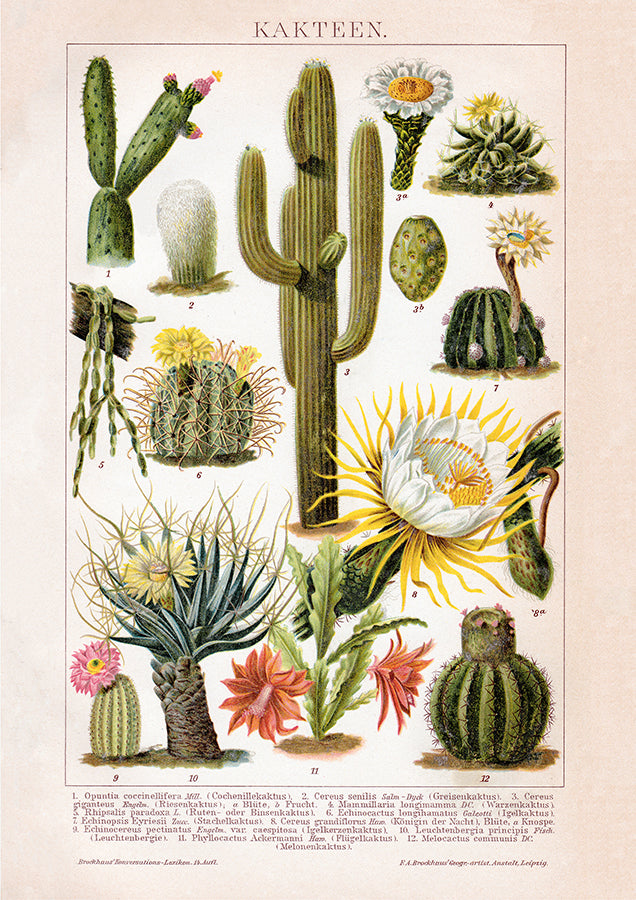 Cactus Collage Brockhaus