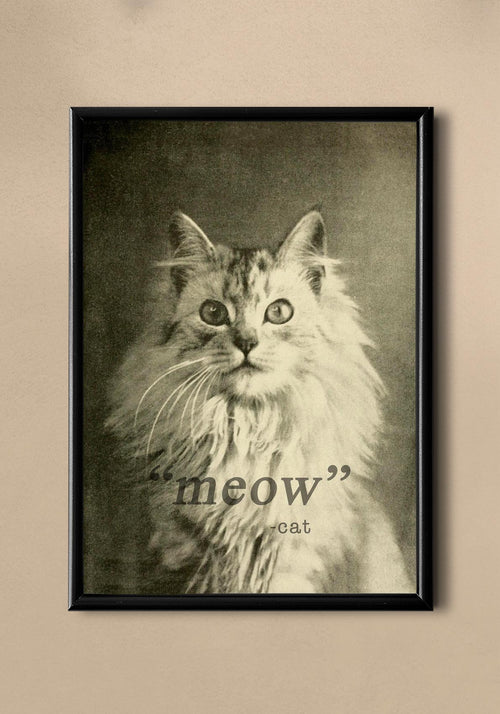 """Meow"" Cat Vintage Photography Poster"