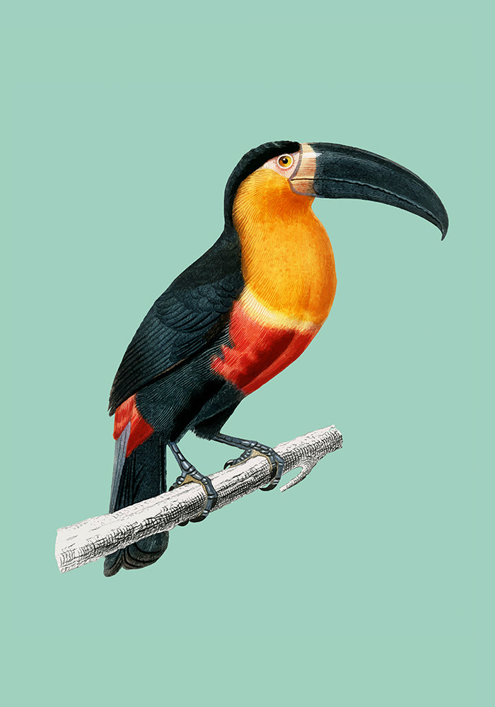 Toucan du Para Green Poster - Perfect for Kids room! - Kuriosis Vintage Prints