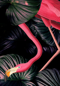 American Flamingo Jungle Poster